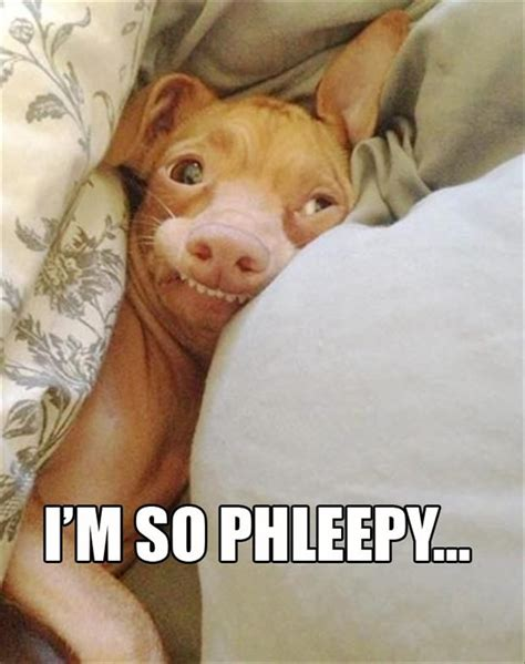 Phteven Dog Meme - phteven dog selfie www pixshark com images galleries