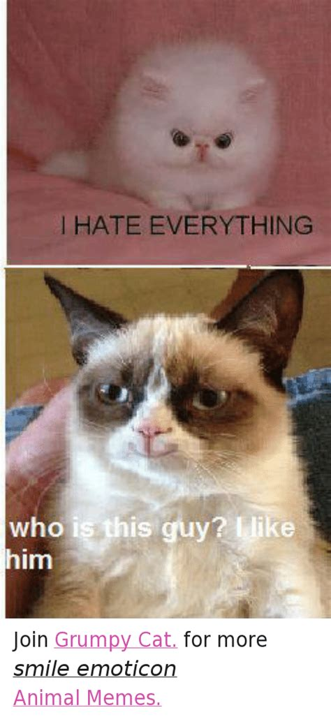 grumpy cat joins cats on animals anime cats grumpy cat meme and memes of