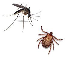 how to kill mosquitoes in home 17 best images about bugs around your house or backyard