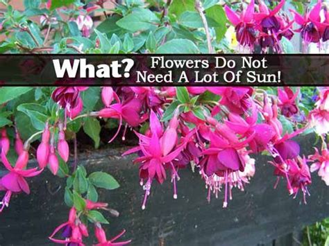 plants that do not need much sunlight plants that do not need sunlight what flowers do not need
