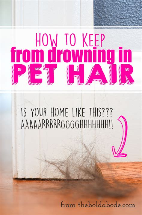 How To Get Your To Stop Shedding So Much by How To Keep From Drowning In Pet Hair