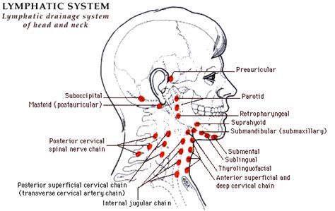 lymphatic drainage system diagram my with lymphedema january 2013