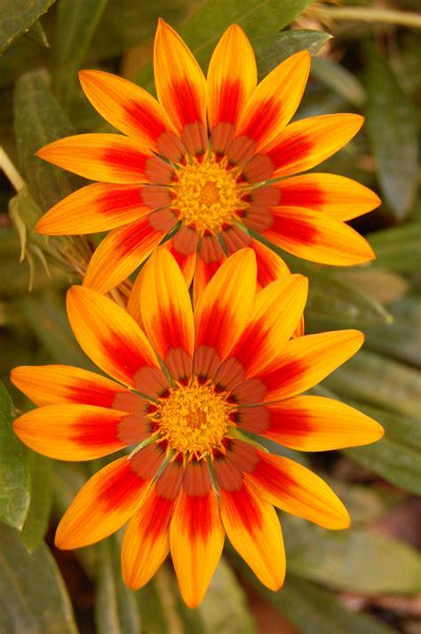 pretty orange pretty orange flower x2 by stickwriterstock on deviantart