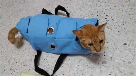Cat Bag gat gat in the vet examination bag