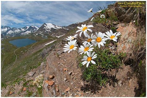 di fiore fotografo oltre 25 fantastiche idee su fotografia di fiori su