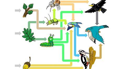 woodpecker food web images