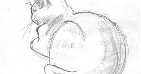 sketsa hewan kucing gambar pemandangan
