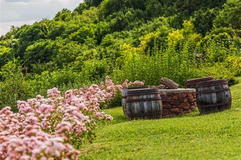 heinerman tree farm wv banco de imagens 225 rvore grama plantar co fazenda gramado prado luz solar flor