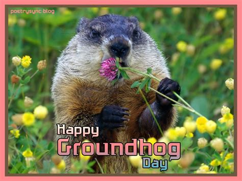 groundhog day buddhism groundhog day quotes quotesgram