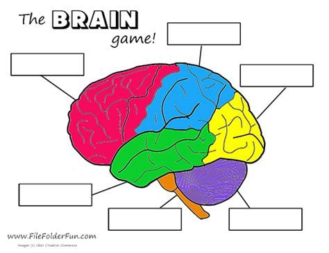 Brain Labeling Worksheet by Human Brain Craft Activities Homeschooling