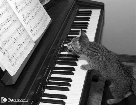 Mini Animal Piano By Mainanbayiku les chats image