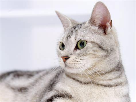 una noche un gato dudas de comportamiento sobre gatos mundogatos com