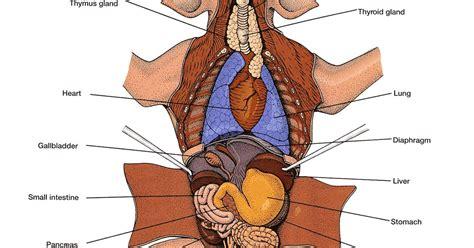 fetal pig stomach diagram and richard go to california
