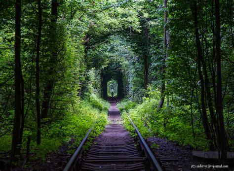 ukraines leafy green tunnel  love   passageway