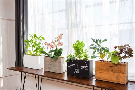 indoor windowsill planter modern sprout automatically waters and feeds your plants
