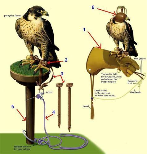 Sarung Tangan Elang pets istilah dunia falconry dan jenis elang