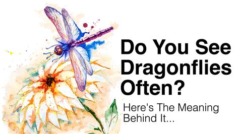 flying colors meaning do you see dragonflies often this is what it means