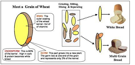 whole grains vs white bread white whole wheat whole grain breads no differences