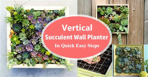 succulent wall planter vertical succulent wall planter in easy steps diy