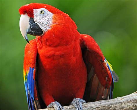macaws bracken bird farm