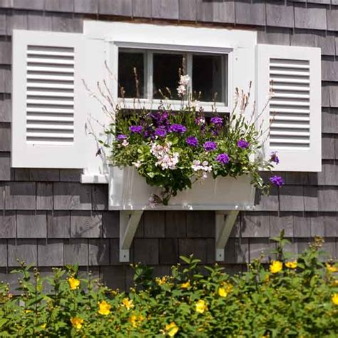 gardening window boxes pops of contrast plant a better window box garden this