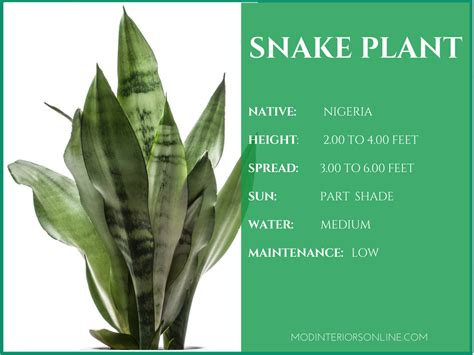 best houseplants for clean air best houseplants for your home promoting clean air and