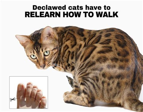 8 Reasons Cats Make Great Companions by 17 Best Images About My Animals On Zoos