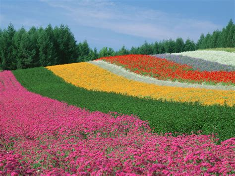 World S Amazing Gardens And Flower Fields Flower Garden In The World