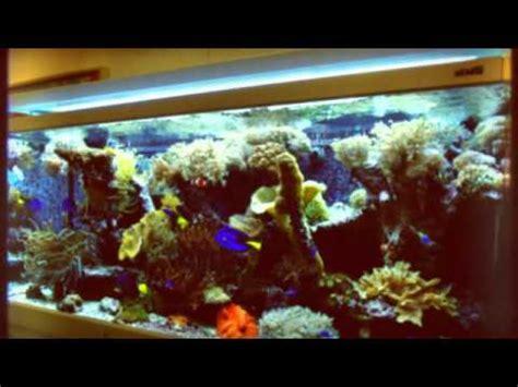 Bibit Rumput Air Dekorasi Aquarium jasa dekorasi aquarium air laut