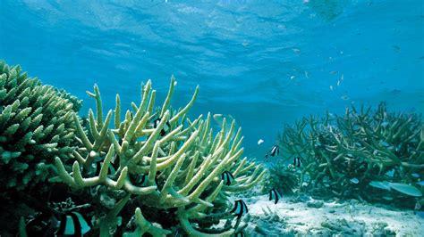 Best Plants For Tropical Aquarium - underwater scenes desktop wallpaper 36 underwater scenes high quality wallpapers nmgncp com