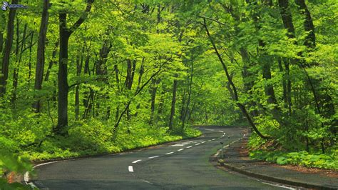 screensaver camino caminos forestales