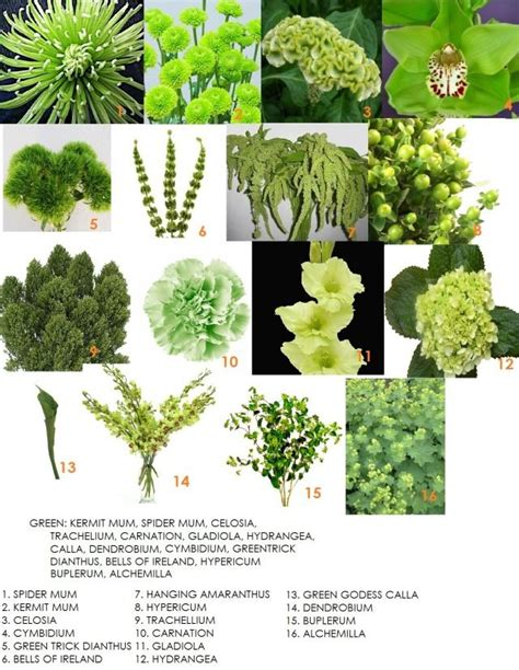 Garden Flower Names List Third In Our Series On Color Green Green Flowers Greenery And Flower
