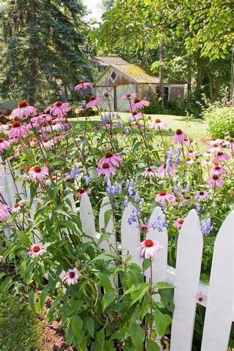 Flowers Amongst The White Picket Fence Gardens White Cottage Garden Flowers