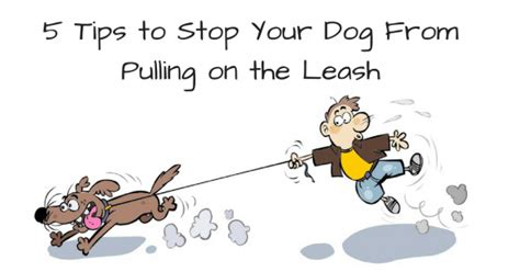 stop from pulling on leash thedogtrainingsecret