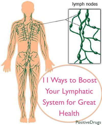 How To Detox Your Lymphatic System Naturally by 11 Ways To Boost Your Lymphatic System For Great Health