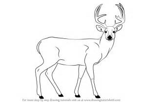 step by step how to draw a buck deer drawingtutorials101 com