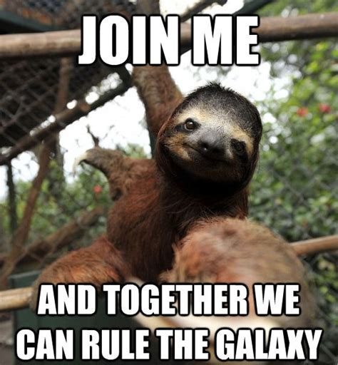 Baby Sloth Meme - 17 best images about 3 toed sloth on pinterest a sloth
