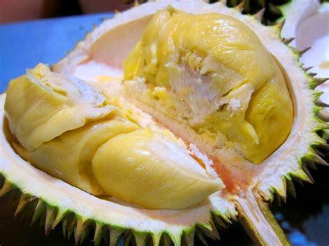 Bibit Durian Petruk Dijual 10 jenis durian asli tanah air yang bikin indonesia jadi