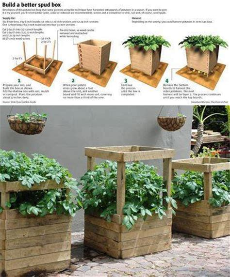 Container Gardening Potatoes - build your own potato growing box