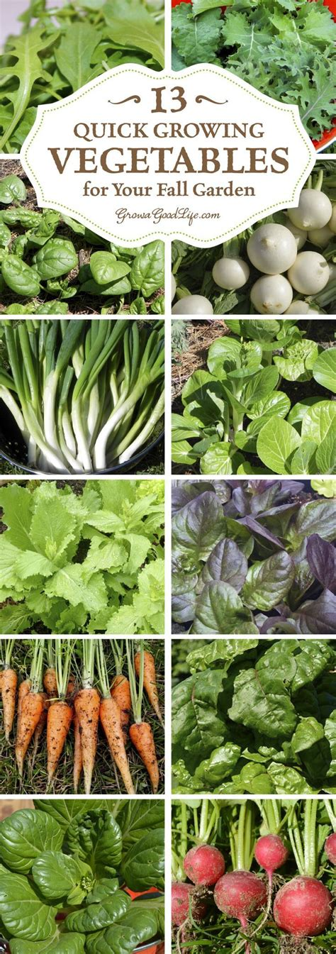 13 Quick Growing Vegetables For Your Fall Garden Gardens Fall Garden Vegetables