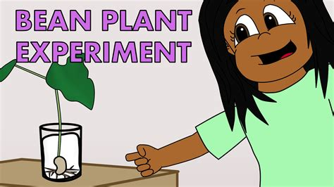 design an experiment using a seedling and a block of agar fun science experiments for kids growing a bean plant