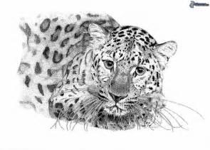 leopard tattoo art and designs