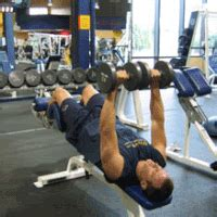 dumbbell bench press calculator dumbbell handstand gifs search find make share gfycat gifs