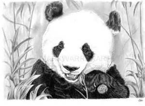 panda reproduction dart 224 la main dessin 233 au crayon animaux