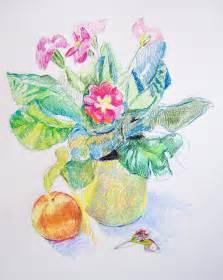 Primroses Flower - drawing a day aletha kuschan s weblog
