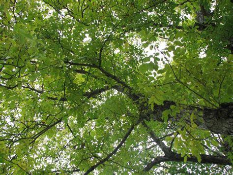 Garten Und Pflanzen 2307 by Garten Und Pflanzen Garten Sichtschutz Holz Pflanzen New