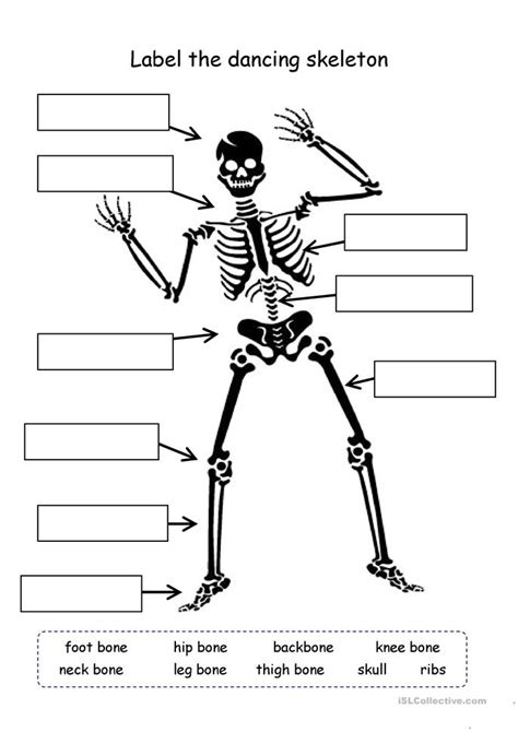 skeleton worksheet label the skeleton worksheet free esl printable worksheets made by teachers