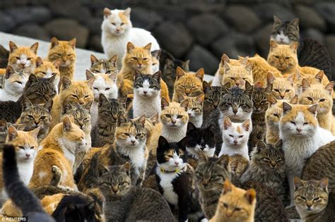 Japan S Aoshima Island Cats Outnumber Humans Six To One | japan s aoshima island cats outnumber humans six to one