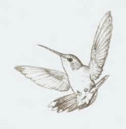 hummingbird drawing hummingbird sketch by colorado sparrow on deviantart