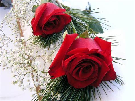 wallpaper for desktop red roses wallpapers red rose wallpapers